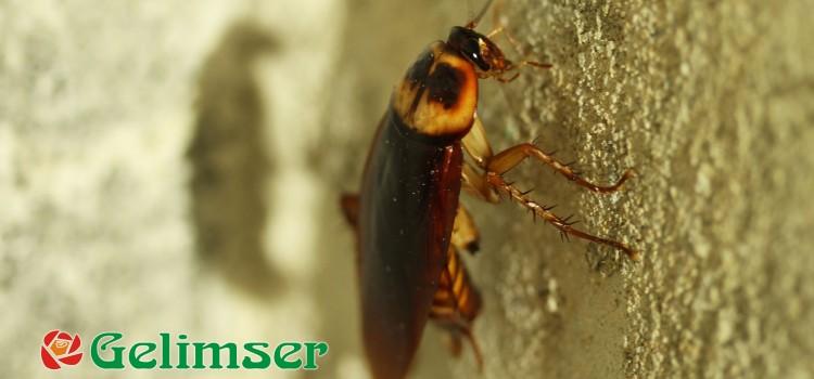 Tratamiento contra las plagas de cucarachas.