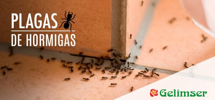 Plagas de hormigas, ¿cuáles son las más comunes y cómo evitarlas?