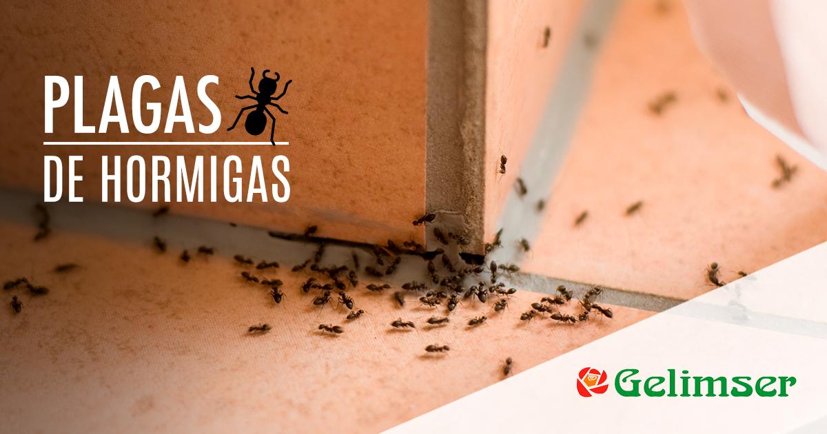 Plagas de Hormigas