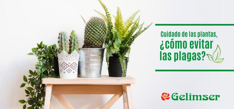 Cuidado de las plantas, ¿cómo evitar las plagas?