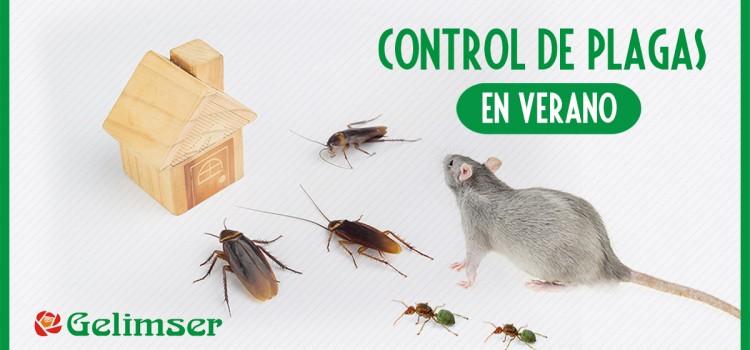Control de plagas en verano