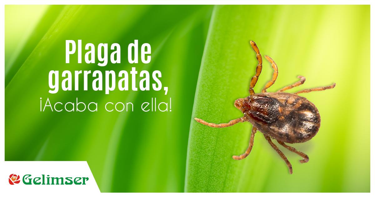 Plaga Garrapatas Málaga