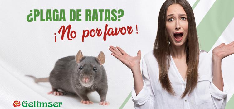 ¿Plaga de ratas? ¡No, por favor!