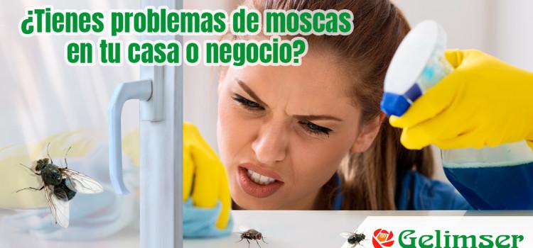 Cómo eliminar una plaga de moscas