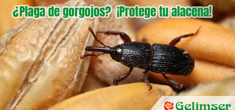 ¿Plaga de gorgojos? ¡Protege tu alacena!