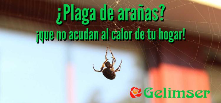 ¿Plaga de arañas? ¡que no acudan al calor de tu hogar!