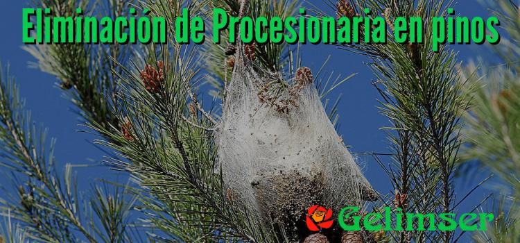 Eliminar nidos de Procesionaria