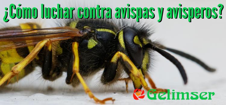 Control de plagas de avispas