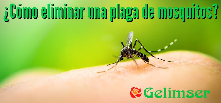 Plaga de mosquitos, control y eliminación