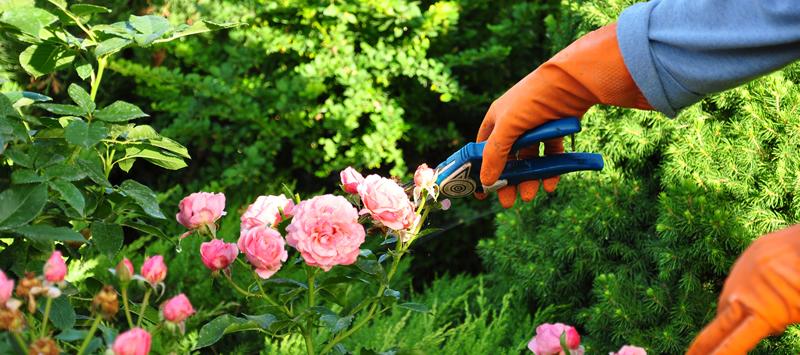 Mantenimiento integral de jardines m laga gelimser - Mantenimiento de jardines ...